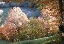 La Naturaleza se viste de oro en el Parque Natural de Redes