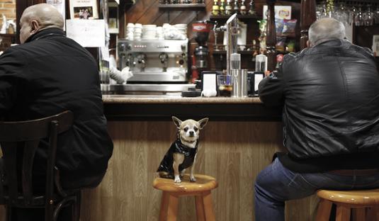 perro en un bar  5/2/2016 foto: Juan Carlos Román