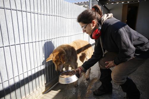 Una cuidadora alimenta a uno de los canes de la perrera de Langreo