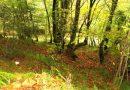 El GDR Alto Nalón organiza en Sobrescobio unas charlas que abordan los posibles usos de los bosques en el Alto Nalón