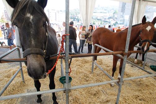 langreo natural feria de ganado caballos