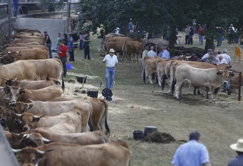Feria de ganado de FEMEX.