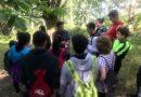 Itinerarios botánicos por los castaños de Los Cabornos