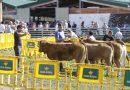 Caso presume de ganado en su concurso anual